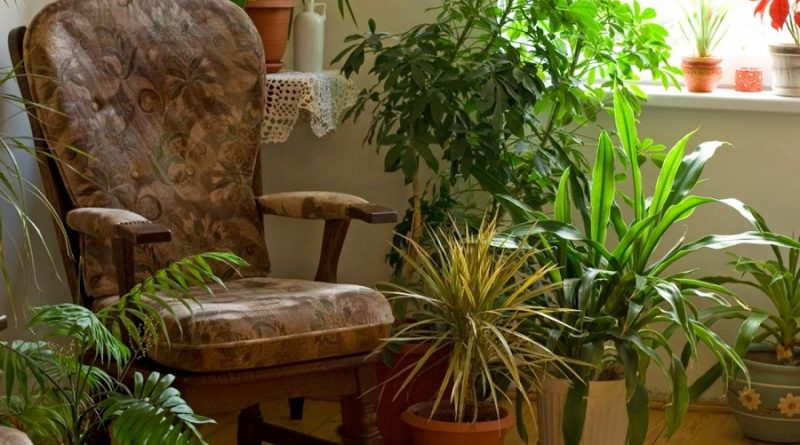 common feng shui plants